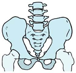 骨盤矯正の説明