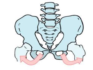 骨盤下部が外側に広がる
